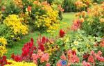 Цветы которые сажают осенью