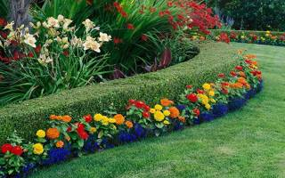 Редкие многолетние цветы для сада