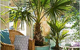 Комнатные растения для южных окон
