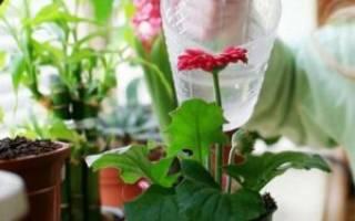 Как удобрять комнатные цветы дрожжами