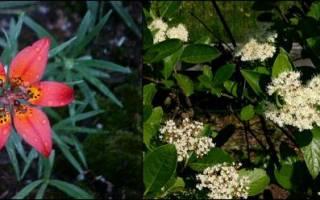 Однодольные растения характеристика особенности значение