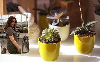 Мифы о комнатных растениях
