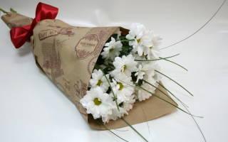 Как размножить хризантему черенками из букета