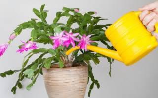 Чем поливать комнатные цветы для быстрого роста