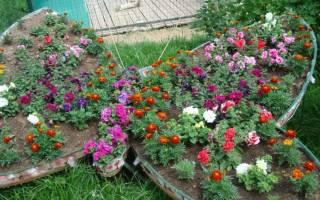 Виды растений для клумб