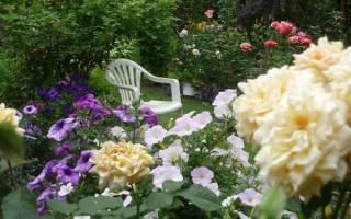 Вертикальный цветник розарий в саду с фото