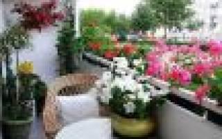 Цветы для балконов название описание и фото