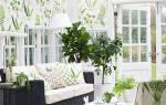 Как красиво расставить комнатные цветы фото