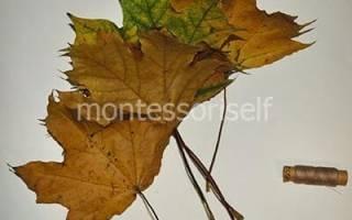 Как сделать розочку из листьев