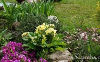 Красивые альпийские горки цветники клумбы фото
