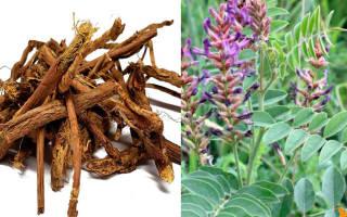 Растение солодка полезные свойства