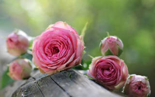 Отличия от простой и кустовой разновидности роз