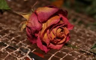 Как высушить лепестки роз в домашних условиях