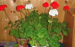 Цветы которые должны быть в доме
