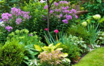 Как создать клумбу непрерывного цветения из многолетников