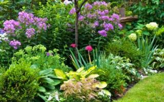 Как создать клумбу с непрерывным периодом цветения