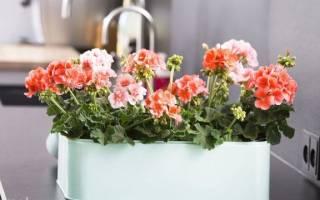 Топ 5 комнатных растений для кухни