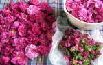 Куда можно использовать лепестки роз