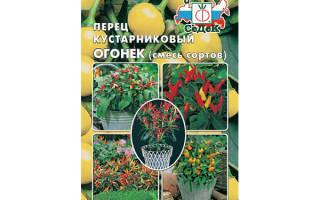 Комнатный перец огонек выращивание