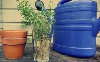 Корневин инструкция по применению для комнатных растений