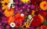 Цветы осени картинки