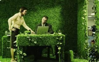 Растения для офиса без окон
