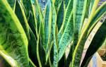 Холодоустойчивые комнатные растения