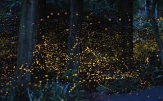 Светящиеся растения в природе