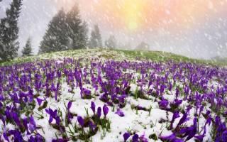 Зоны морозостойкости растений в россии