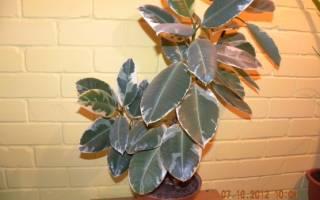 Этикетки для комнатных растений в школе