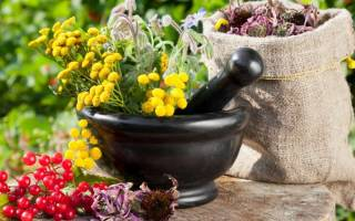 Где расположить лечебный цветник