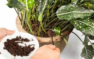 Спитый кофе как удобрение для комнатных растений