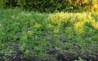 Определение кислотности почвы по растениям