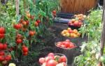 Удобрение из хлеба для растений