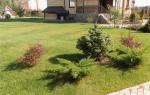 Клумбы с хвойными растениями фото