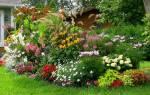 Многолетники в саду