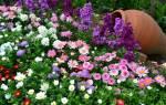 Список красивых многолетних цветов для сада
