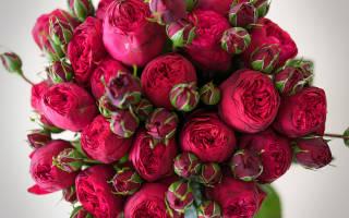 Популярные сорта пионовых роз и их названия