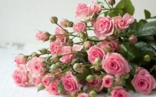 Как продлить жизнь розового букета