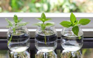 Размножение комнатных растений различными способами
