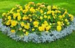 Варианты цветников для начинающих и основы их создания