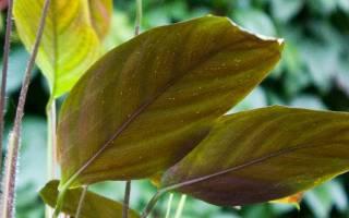 Как вывести белокрылку из комнатных растений