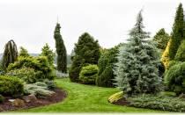 Число видов хвойных растений