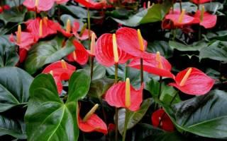 Цветы которые не боятся сквозняков