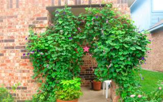 Многолетние вьющиеся растения для сада