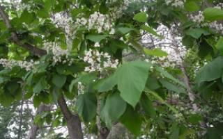 Многолетние декоративные растения