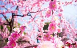 Красивые розовые цветы