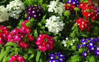 Цветы цветущие в октябре
