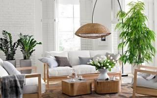Размещение комнатных цветов в квартире хвастаемся